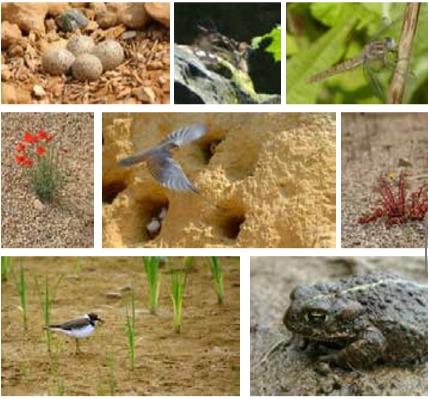 Life in Quarries - Biodiversité